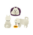Set of happy smiling white dogs sitting eating vector image