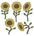 set of sunflower vector image