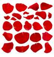 a set of crimson rose petals vector image vector image