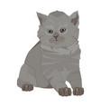 british shorthair breed cute kitten flat vector image vector image
