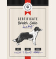 dog show certificate with border collie vector image vector image
