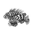 hand drawn lionfish vector image vector image
