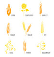 cereal icons set with rice wheat corn oats rye vector image vector image
