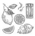 collection of highly detailed hand drawn lemones vector image