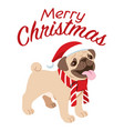 cute pug dog celebrating the christmas vector image vector image