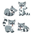 collection of the grey racoon vector image vector image
