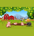 farm animal at farmland vector image