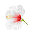 flower tropical plant hibiscus white vector image vector image