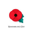 poppy flower for remembrance day vector image