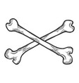 crossed bones sketch engraving vector image