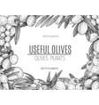 design of hand drawn olives vintage sketch vector image vector image