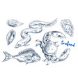 different marine animals as seafood vector image