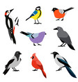 set of winter birds flat design birds icon vector image vector image