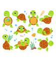 cartoon turtles animal tortoise smiling turtle vector image vector image