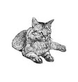 sitting cat hand draw sketch vector image vector image