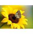 Yellow sunflower with a butterfly vector image vector image