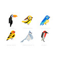 colorful stylized birds collection toukan vector image vector image