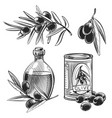 hand drawn olive oil bottles and olives vector image vector image