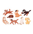 set cute playful goldendoodles and labradoodles vector image
