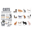 cat breeds infographic template icon isolated on vector image