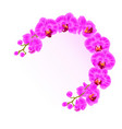 frame orchid phalaenopsis purple flowers vector image