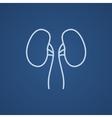 Kidney line icon vector image