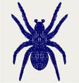 Spider tarantula vector image vector image