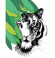 Tiger under leafes in vector image