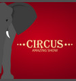 circus banner circus ticket amazing show flat vector image vector image