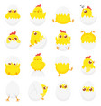 cute chicken in egg easter baby chick newborn vector image vector image