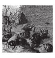 hermit crabs vintage vector image vector image