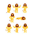 lion set poses and motion wild animal happy and vector image vector image