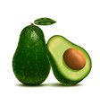 realistic detailed 3d whole avocado and slice vector image vector image