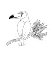 colorless funny cartoon toucan vector image vector image