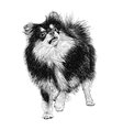 Dog 10 vector image