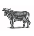 hand drawn beef vector image vector image