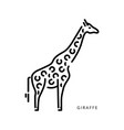 outline logo drawing giraffe african animal vector image