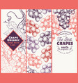 set of three grape banners grape berry frame vector image vector image