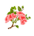 branch pink hibiscus tropical flowers vector image vector image