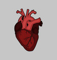 f red human heart on grey vector image vector image