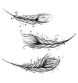 Intricate Decorative Feathers vector image vector image