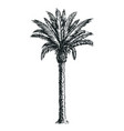 sketch of palm tree isolated on white background vector image