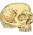 voodoo skull vector image