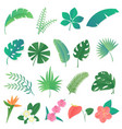 cartoon set of isolated tropical leaves vector image vector image