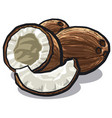 cracked coconuts vector image