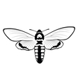 Death s Head Hawkmoth vector image vector image