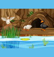 ducks in cave scene vector image