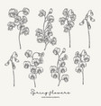 hand drawn sweet pea spring flowers set garden vector image vector image