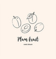 plum fruit graphic drawing sketch plums on a vector image vector image