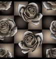 white roses on chessboard background vector image